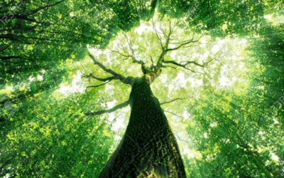 Chacra raíz – El autoapoyo y la confianza en ti